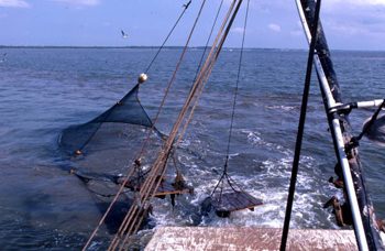 Trawl net approaches stern: Apalachicola Bay, Florida (1986)