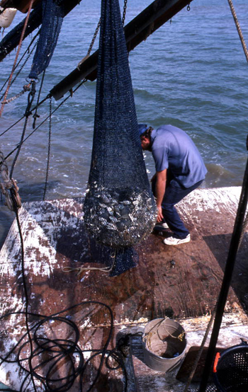 Dale Davis brings trawl net on the deck: Apalachicola Bay, Florida  (1986)