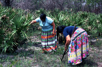 Claudia C. John helping her mother Mary B. Billie look for palmetto fibers to make dolls : Big Cypress Seminole Indian Reservation, Florida (not after 1980)