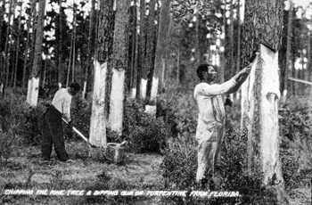 Chipping the pine tree and dipping gum on a turpentine farm (189-)