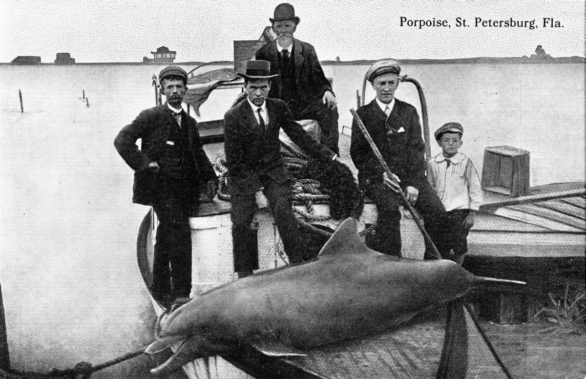 Dolphin - Saint Petersburg, Florida.