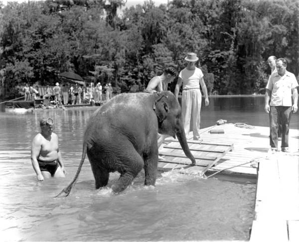 "Elephant during filming of ""Tarzan's Secret Treasure"" at Wakulla Springs - Wakulla Springs, Florida."