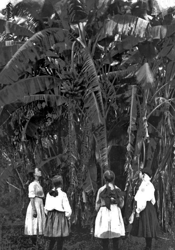 Girls looking at banana plants - Tallahassee, Florida.