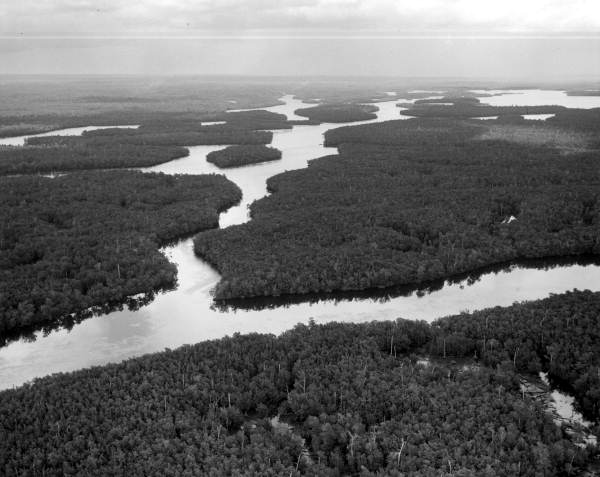 Aerial view of Shark River.
