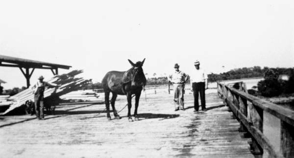 Moving a cart of lumber by mule at the Bagdad Land and Lumber Company - Bagdad, Florida
